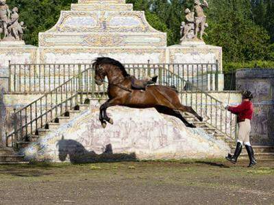 Lusitano Horse, Man Training Stallion In Dressage Steps, The High Leap