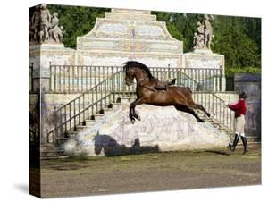 Lusitano Horse, Man Training Stallion In Dressage Steps, The High Leap by Carol Walker