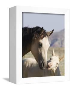 Wild Horse Mustang, Cremello Colt Nibbling at Yearling Filly, Mccullough Peaks, Wyoming, USA by Carol Walker