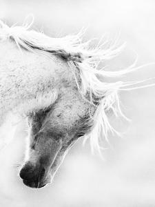Wild Horse / Mustang Shaking Head and Mane, Adobe Town Herd Area, Southwestern Wyoming, Usa by Carol Walker