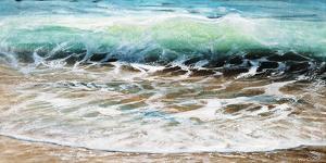 Shoreline study 19916 by Carole Malcolm