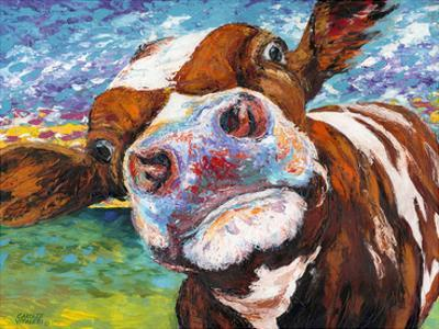 Curious Cow I by Carolee Vitaletti
