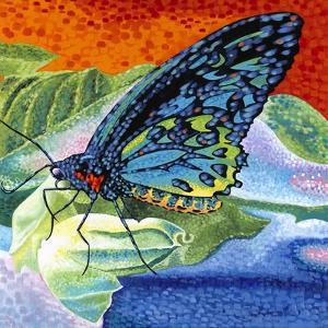 Poised Butterfly II by Carolee Vitaletti