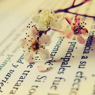 Close Up of Cherry Blossom