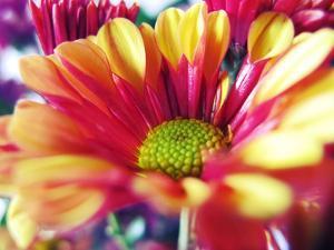 Close Up of Pink Flower Petals by Carolina Hernández