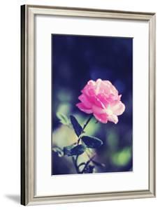Pink Rose by Carolina Hernández