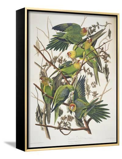 "Carolina Parakeet, from ""Birds of America,"" 1829-John James Audubon-Framed Canvas Print"
