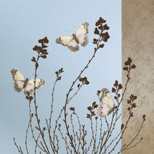 Butterflies by Caroline Gold