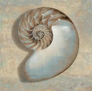 Aqua Nautilus by Caroline Kelly