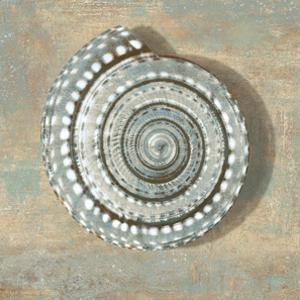 Aqua Seashell by Caroline Kelly