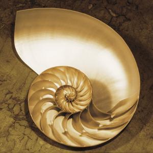 Chambered Nautilus by Caroline Kelly