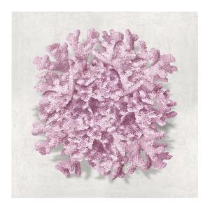 Coral Blush II by Caroline Kelly