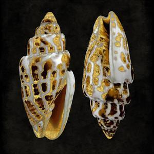 Golden Ocean Gems I by Caroline Kelly