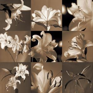 Lily Garden by Caroline Kelly