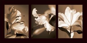 Lily Trio by Caroline Kelly