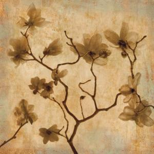 Magnolias I by Caroline Kelly