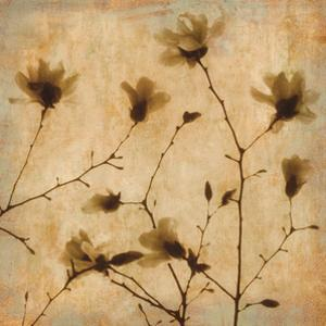 Magnolias II by Caroline Kelly