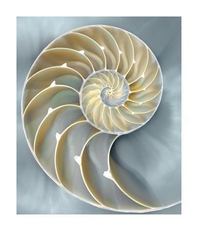 Nautilus in Blue I