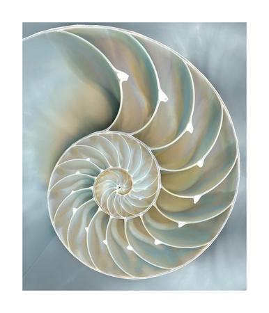 Nautilus in Blue II