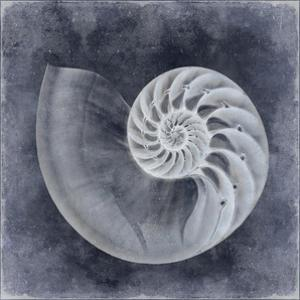 Ocean Blue IV by Caroline Kelly