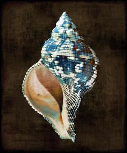 Ocean Treasure III by Caroline Kelly