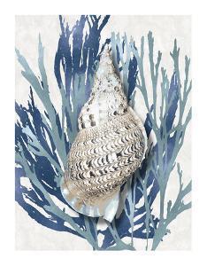 Shell Coral Aqua Blue I by Caroline Kelly