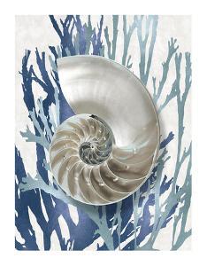 Shell Coral Aqua Blue II by Caroline Kelly