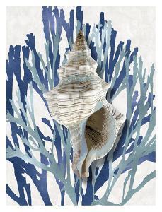 Shell Coral Aqua Blue III by Caroline Kelly