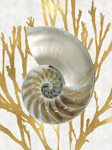 Shell Coral Gold II by Caroline Kelly