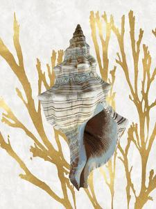 Shell Coral Gold III by Caroline Kelly
