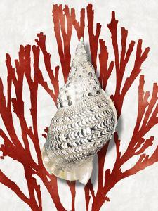 Shell Coral Red I by Caroline Kelly