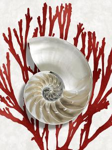 Shell Coral Red II by Caroline Kelly