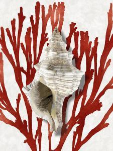 Shell Coral Red III by Caroline Kelly