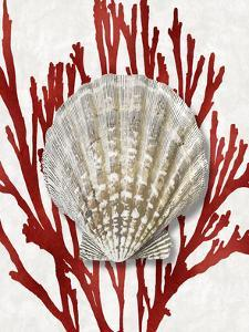 Shell Coral Red IV by Caroline Kelly