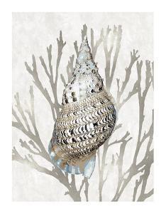 Shell Coral Silver I by Caroline Kelly