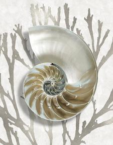 Shell Coral Silver II by Caroline Kelly
