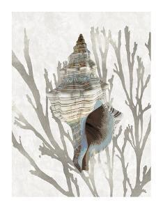 Shell Coral Silver III by Caroline Kelly