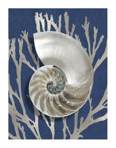 Shell Coral Silver on Blue II by Caroline Kelly