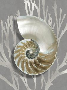 Shell Coral Silver on Gray II by Caroline Kelly