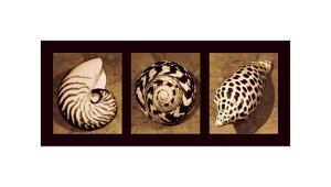 Shell Trio by Caroline Kelly