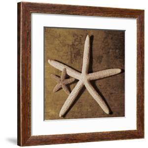 Starfish by Caroline Kelly