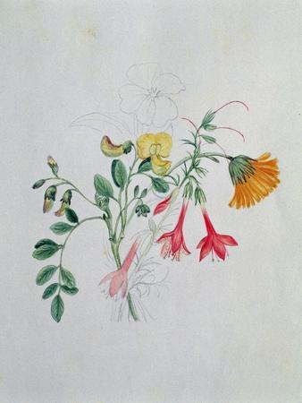 Broom and Marigolds