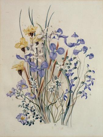 Spring Flowers, 19th Century
