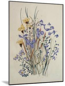 Spring Flowers, 19th Century by Caroline Louisa Meredith