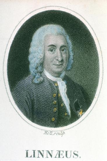 Carolus Linnaeus, 18th Century Swedish Naturalist, Early 19th Century--Giclee Print
