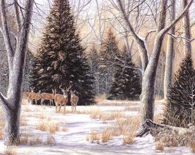 Cedar Sunday by Carolyn Mock