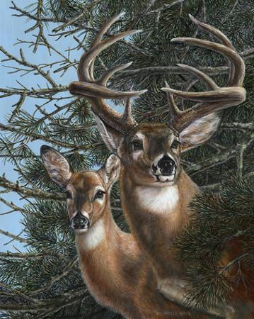 Edge of the Pines by Carolyn Mock