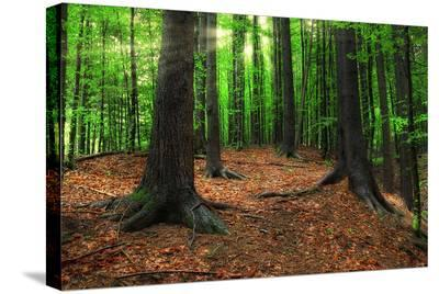 Carpathian Forest in Morning--Stretched Canvas Print