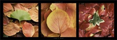 Carpet of Leaves-Laurent Pinsard-Art Print
