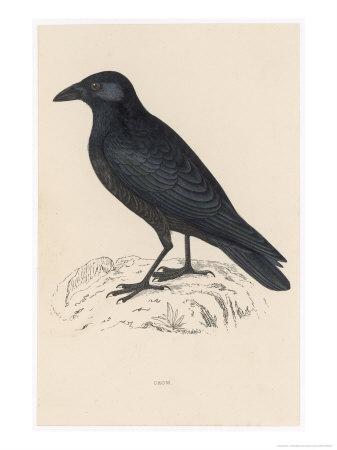 https://imgc.artprintimages.com/img/print/carrion-crow_u-l-ottte0.jpg?p=0